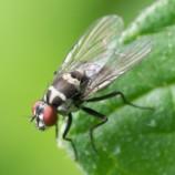Metodi e buone pratiche per trattare larve e mosche