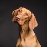 Alcuni cani possono 'fiutare' i casi positivi?