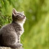 Perchè è proprio oggi la festa del gatto?