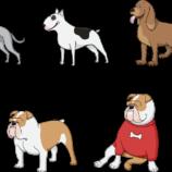 USA: sparano al dogsitter e rubano i cani di Lady Gaga